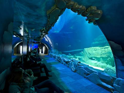 voir des animaux 224 et autour de fermes zoos aquariums parisianavores