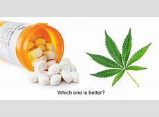 Medical Marijuana and the Opioid Epidemic Live Trading News