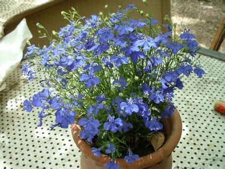 fleurs en pot plein soleil my