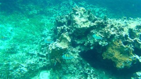 Catamaran Snorkeling Montego Bay Jamaica by Snorkeling Off The Catamaran Picture Of Hotel Riu