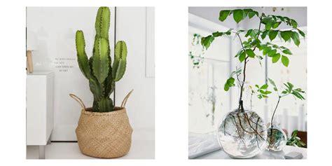 orchidee pot transparent ou pas 28 images mes fleurs pots ou vases page 2 cultiver les