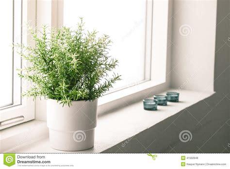 indoor plant in a bathroom window stock photo image 41550948