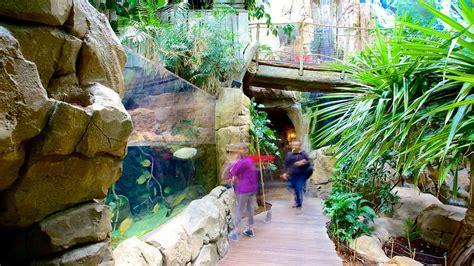 mare nostrum aquarium in montpellier occitanie expedia ca