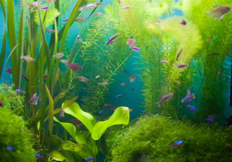 d 233 cor aquarium noirci
