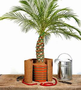 Tragehilfe Für Kübelpflanzen : palmen berwintern garten rasenpflege ~ Markanthonyermac.com Haus und Dekorationen
