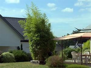 Welche Pflanzen Als Sichtschutz : bambus sichtschutz auf terrasse balkon ~ Markanthonyermac.com Haus und Dekorationen