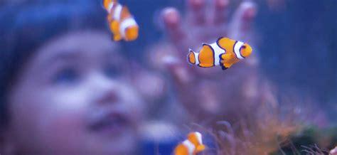 aquarium eau douce caract 233 ristiques ooreka