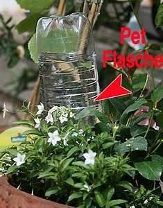 Pflanzen Bewässern Mit Plastikflasche : die besten 17 ideen zu bew sserung auf pinterest tr pfchenbew sserung und g rtnern ~ Markanthonyermac.com Haus und Dekorationen