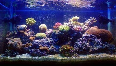 mise en place d un aquarium d eau de mer aquariophilie du 31