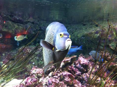 aquarium de archives la reine de l iode