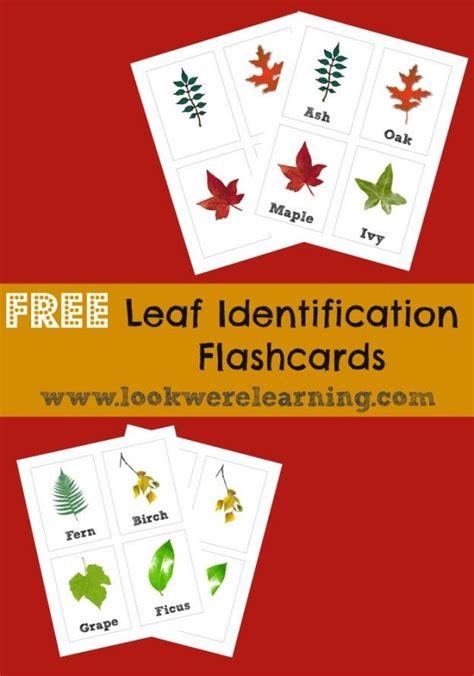 Free Printable Flashcards Leaf Identification  Homeschool, Fall And Free Printable