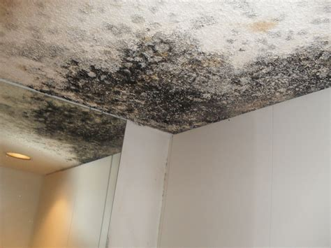 Toxic Black Mold Removal