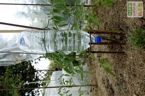 le bon arrosage de la tomate jardipartage