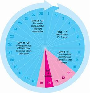 The Menstrual Cycle | SexInfo Online