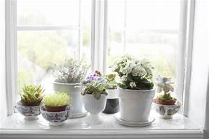 Fensterbank Dekorieren Wohnzimmer : fensterbank deko mit pflanzen die einen kleinen garten erschaffen ~ Markanthonyermac.com Haus und Dekorationen