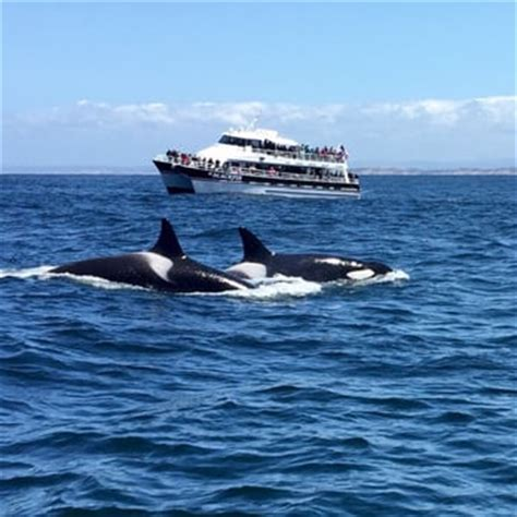 Monterey Whale Watching Boats by Monterey Bay Whale Watch 149 Photos 241 Reviews Boat