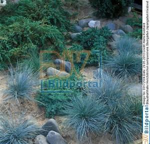 Alternative Zu Gras Garten : details zu 0003172504 gras gr ser ziergr ser im garten gras als gestaltungsmittel im ~ Markanthonyermac.com Haus und Dekorationen