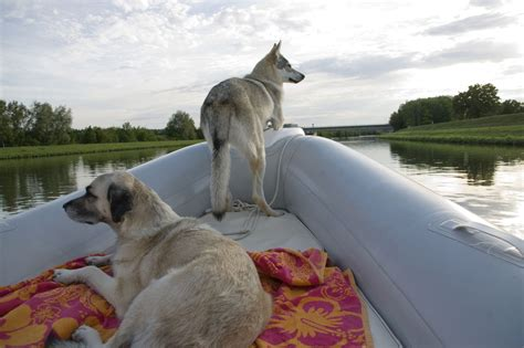 Dog Motor Boat by Want Information About The Great Dane German Shepherd Mix