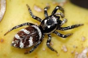 Spinnen Fernhalten Wohnung : spinnen nabu ~ Whattoseeinmadrid.com Haus und Dekorationen