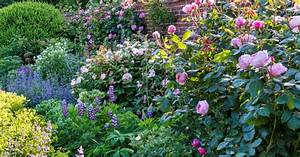 Kletterrosen Richtig Pflanzen : pflanzen von rosen rosen im k bel unsere top 3 und einige begleitpflanzen rosen pflanzen rosen ~ Markanthonyermac.com Haus und Dekorationen