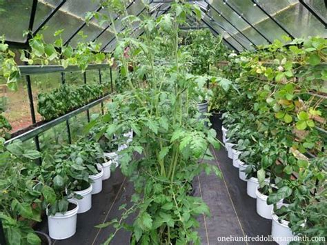 how to grow food in a greenhouse greenhouse setup ideas
