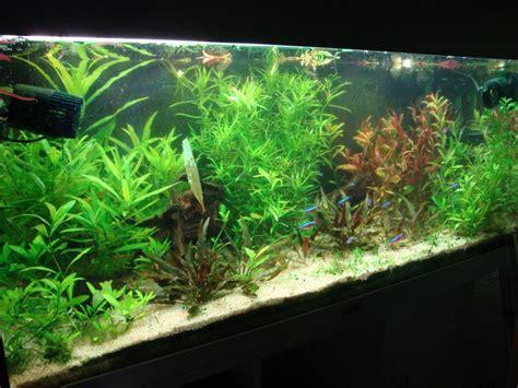 aquarium amazonien plant 233 par spootymilk