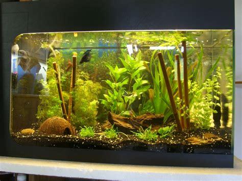 conseils pour un aquarium amazonien de 160 litres