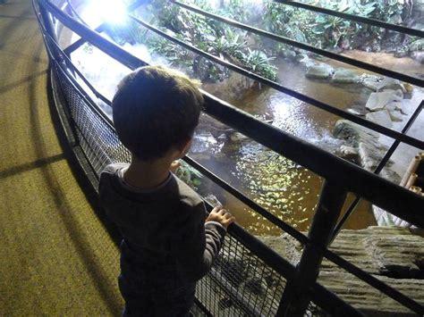 souvenir d enfance l aquarium tropical porte dor 233 e happy family