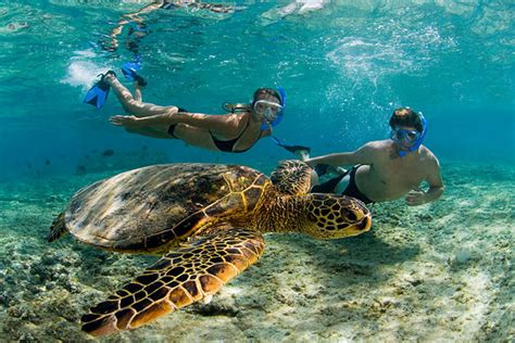 Catamaran Snorkeling Kona Hawaii by 21 Most Beautiful Amazing Snorkeling Adventure Best