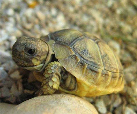tortue sonne avec impasse des pas perdus