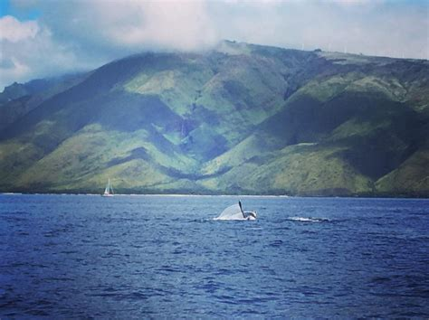 Boat Cruise Maui by Maui Boat Trips Aboard The Pride Of Maui