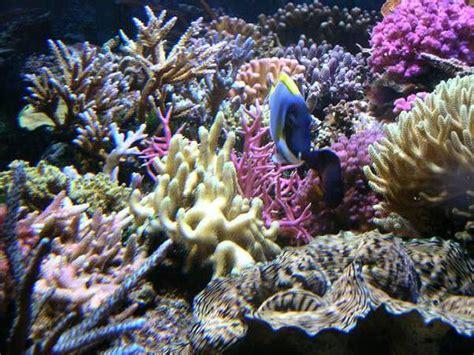 aquarium r 233 cifal et des aquariums r 233 cifaux