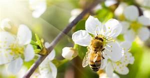 Warum Sind Pflanzen Grün : warum insekten so wichtig sind mein sch ner garten ~ Markanthonyermac.com Haus und Dekorationen