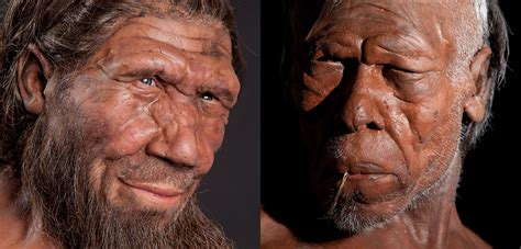 neanderthals and humans had le time for interbreeding history museum