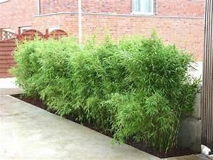 Bambus Im Garten : der bambus modisch praktisch wundersch n ~ Markanthonyermac.com Haus und Dekorationen