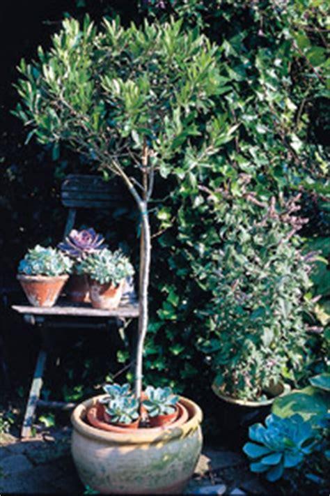 plantes en pot sp 233 cial s 233 cheresse le magazine gamm vert