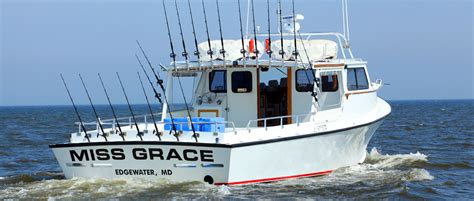 Fishing Boat Charter Annapolis by Chesapeake Bay Charter Fishing Miss Grace Charters