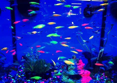 black light fish my black lights fish tanks and lights