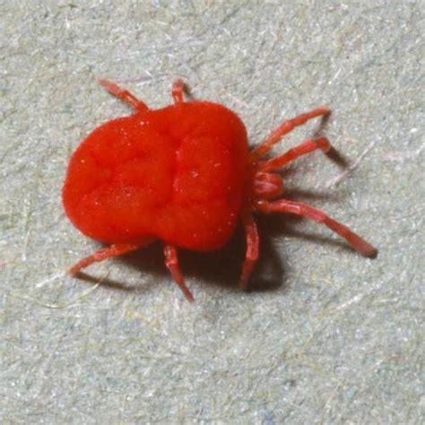 lutter contre les araign 233 es rouges jardinage