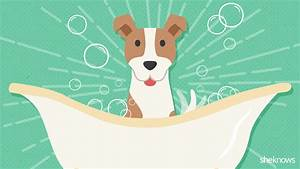 Dog grooming 101: A timeline of when to groom your dog ...