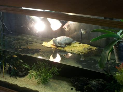 exemple d 233 coration pour aquarium tortue
