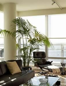 Pflanzen Für Wohnzimmer : palmen f rs wohnzimmer die das zimmer zweifellos erfrischen ~ Markanthonyermac.com Haus und Dekorationen