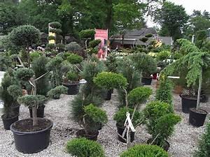 Mediterraner Garten Winterhart : hauptnavigation baumschule rosen hecken stauden ~ Markanthonyermac.com Haus und Dekorationen