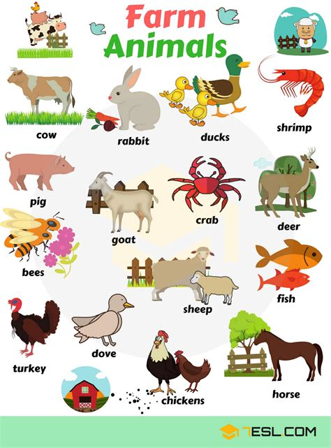 Animals Vocabulary, Names, List, Pictures  7 E S L