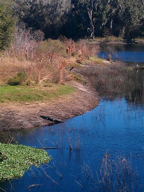 17 best images about gainesville fl alachua county on preserve lakes and fossil