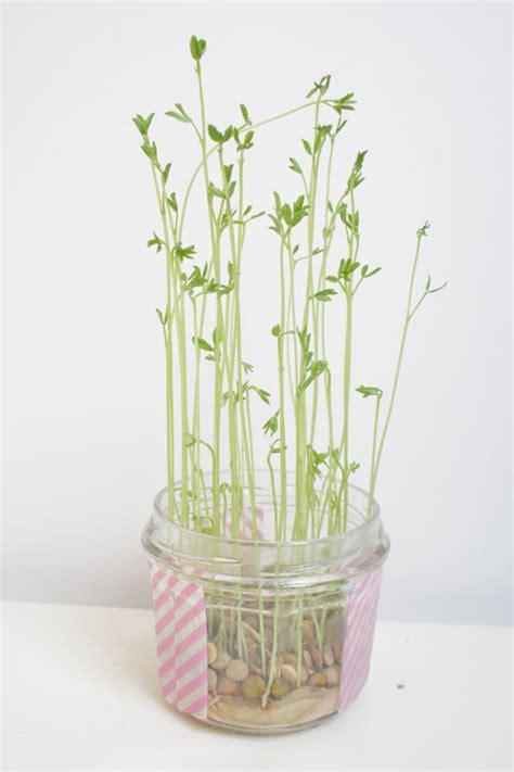 diy petites plantes d int 233 rieur 224 faire pousser soi m 234 me