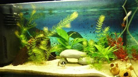 mon aquarium d eau douce de 60 l page 2