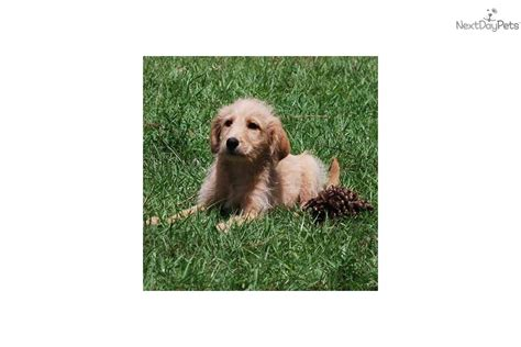 low shedding dogs list non shedding dogs a list of small mid sized and large dogs
