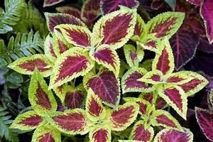 Pflegeleichte Zimmerpflanzen Mit Blüten : 26 absolut pflegeleichte zimmerpflanzen f r anf nger ~ Markanthonyermac.com Haus und Dekorationen