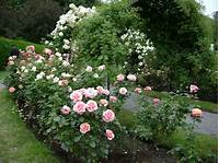 nice rose garden design Of course you can grow Roses! | Garden Snips
